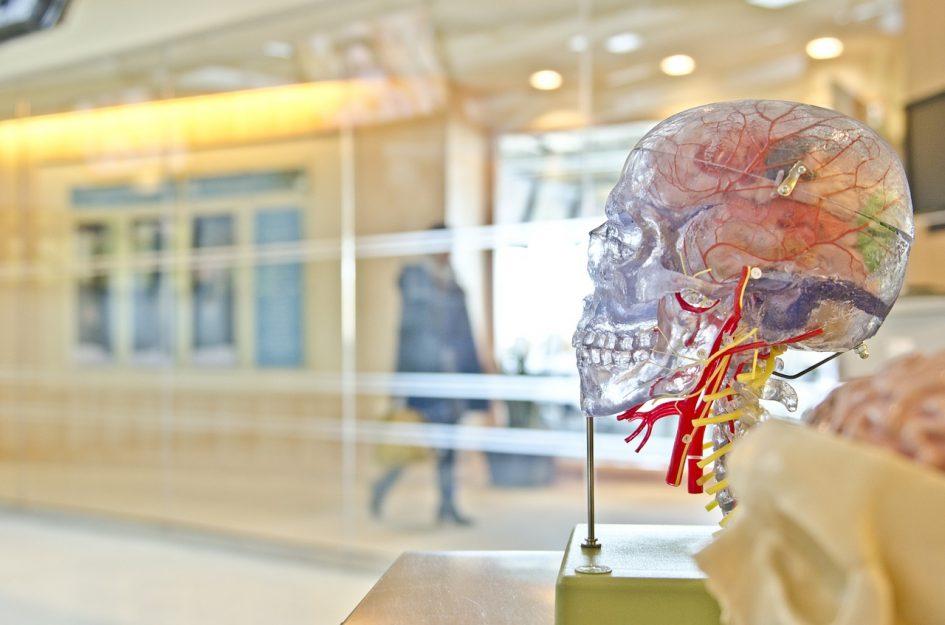 Studieren über 40: Auswirkungen aufs Gehirn